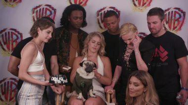 Momento cute da semana: Doug the Pug Interviews